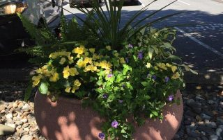Container Gardening 3