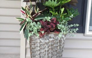 Container Gardening 6