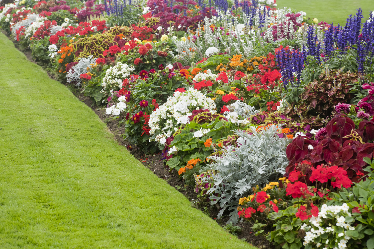 Colorful Garden Flower Bed